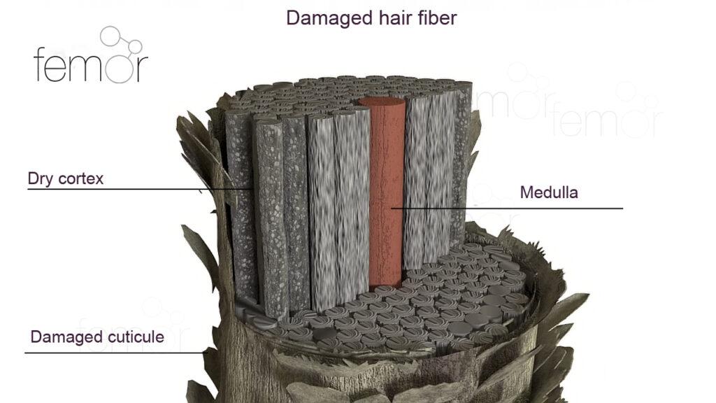 חתך של סיב שיער פגום